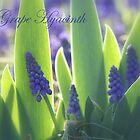 Spring Lovelies! by rasnidreamer