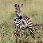Zebra Baby by rmc314