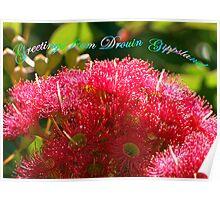 Flowers - Ficifolia Eucalypt - Drouin  Poster