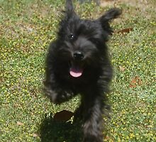 Cute little Sookie by zpawpaw