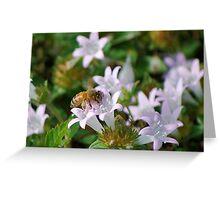 Honeybee on white flower Greeting Card