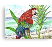 Seaside Parrot Canvas Print