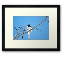 Black-capped Chickadee March 24th, 2011 Framed Print