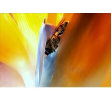 This Must Bee Paradise Photographic Print