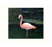 Exquisitely Elegant... Art Print