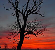 Sunset with silhouetted tree by David Isaacson