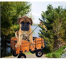 AW LOOKI THERE I CAUGHT A BITE..CUTE PUG CANINE GOES FISHING ..PICTURE...PILLOW...TOTE BAG...ECT... Photographic Print