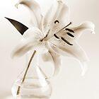 Lily by Cheryl Vorhis