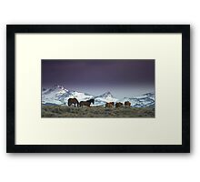 Following The Trail Of  Wild Horses  Framed Print