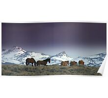 Following The Trail Of  Wild Horses  Poster