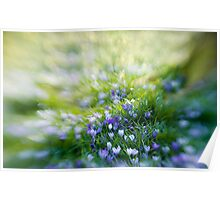 Spring Painterly Poster