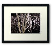 Pink Blossoms Cascading In The Night Framed Print
