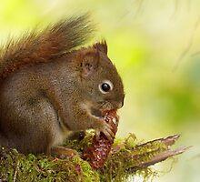 RED SQUIRREL by Sandy Stewart