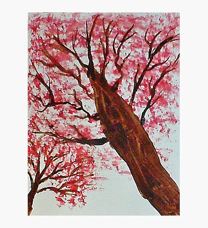 Looking Up Thru Blooming Tree, watercolor Photographic Print