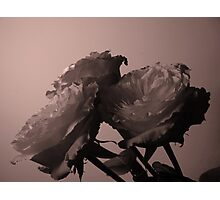 tinted rose3 Photographic Print