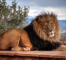 King Of The Jungle by Eddie Yerkish