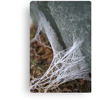 Web tethered rocks Canvas Print