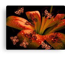 Butterflies  & Lily. Canvas Print