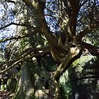 rock, tree and root by Steve