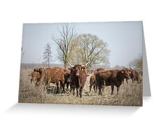 Bovine Animals Greeting Card