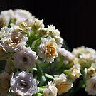 Spring, take 2 by Nathalie Chaput