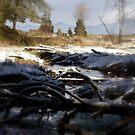 snowy Oregon forest , Fox Creek 6 by Dawna Morton