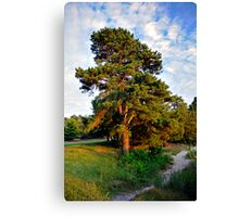 Lone Pine by the Lake Canvas Print