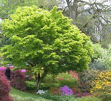 Dartington Garden in the Spring by Janice Petitjean