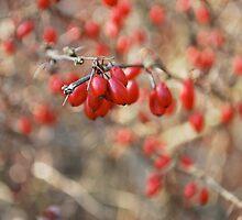 Briar Berries  by Jeff Stroud