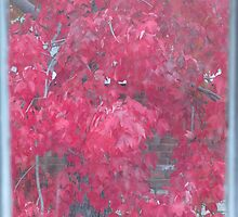 Autumn Leaves Through Window by Janice Petitjean