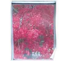 Autumn Leaves Through Window Poster