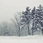 Winter Blues by A Different Eye Photography