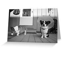 My Gimp Puppy Greeting Card