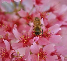 Busy Bee by A Different Eye Photography