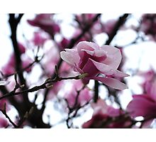 The Breathtaking Beauty of Spring Photographic Print