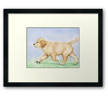 Golden Puppy Framed Print