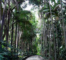 Through the Palms by Graeme  Hyde