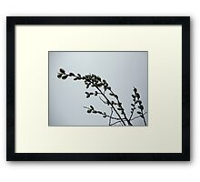 Pussy Willow Catkins Framed Print