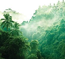 Bali Rainforest - Nature Landscape by Cubagallery