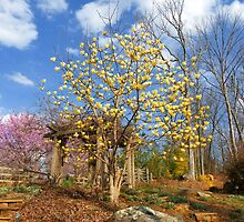 Early Spring in the Arbor Garden by Kate Eller