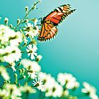 Butterfly and flowers - Nature by Cubagallery