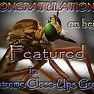 Feature Banner Challenge EXTREME CLOSE-UPS  by Savannah Gibbs