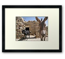 Goldilocks in the Middle East Framed Print