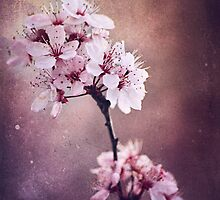 Cherry Blossom by kamieo