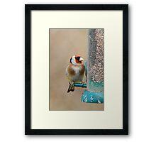 Goldfinch 2 Framed Print