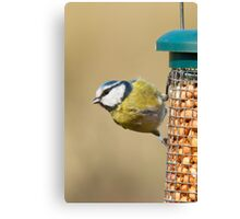 Blue tit 2 Canvas Print