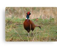 Pheasant 4 Canvas Print