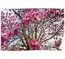 Magnificent Magnolia Poster