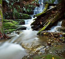 Myrtle Gully Falls, Hobart #5 by Chris Cobern