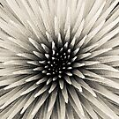Silversword by Zach Pezzillo